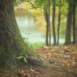 Piękny oraz {estetyczny zieleniec to nie lada wyzwanie, przede wszystkim jak jego pielęgnacją zajmujemy się sami.